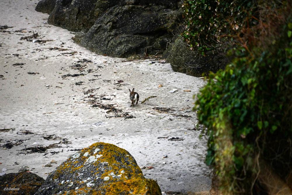 Un lapin à la plage
