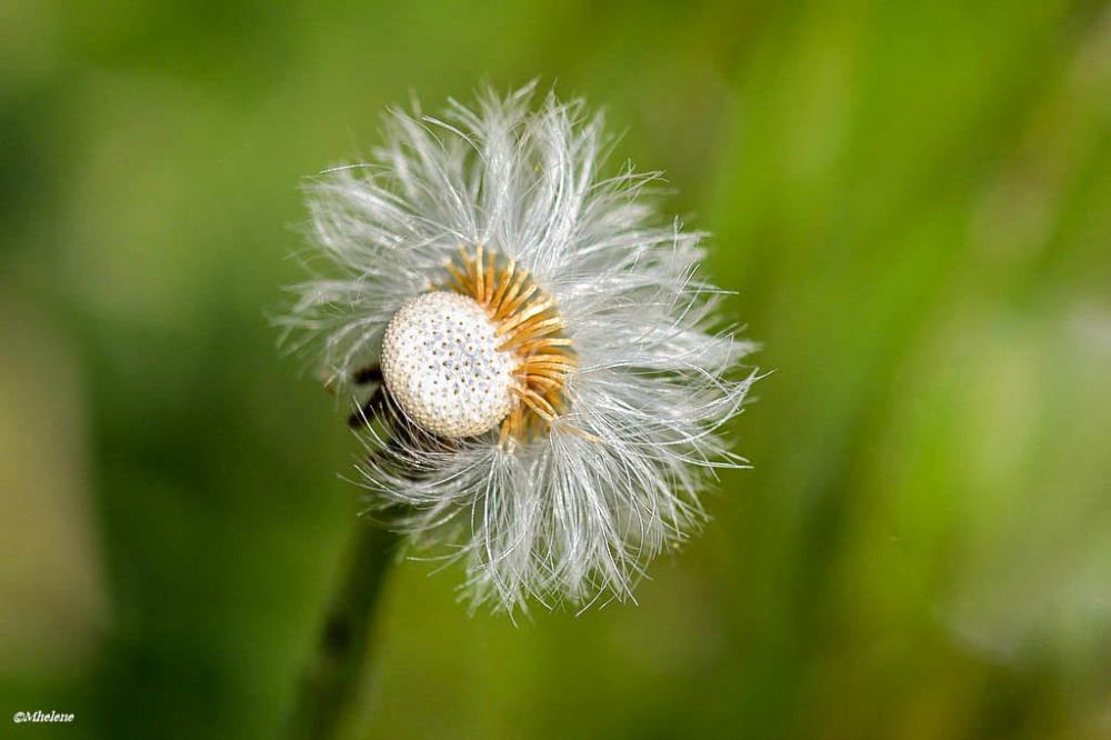 Le sens du vent