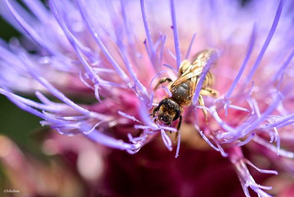 L'été des insectes