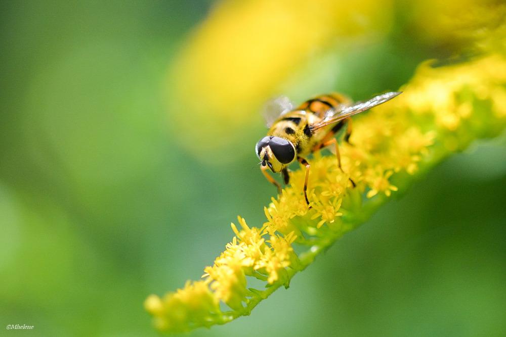 L'été des insectes -2