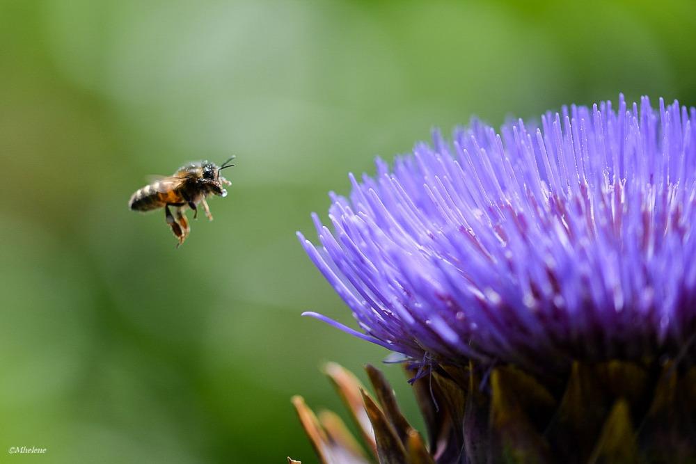 L'été des insectes -3