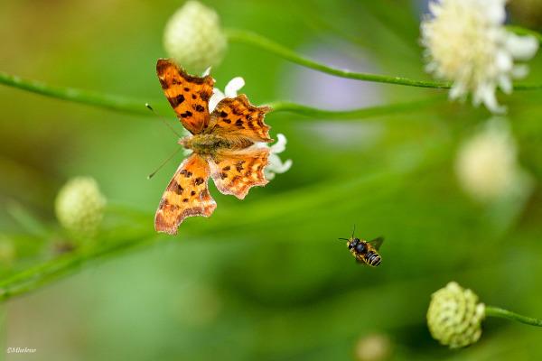 L'été des insectes  5
