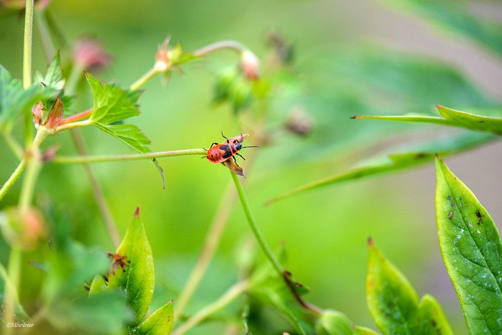 L'été des insectes -6