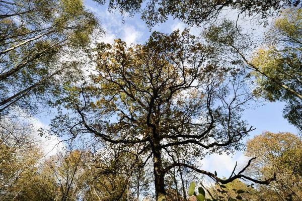 Les arbres -2