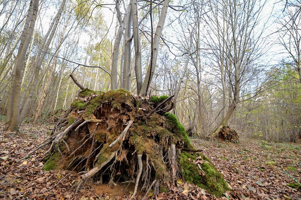 Les arbres -3