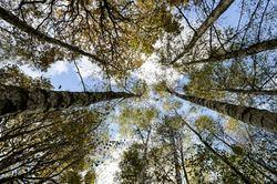 Les arbres  4