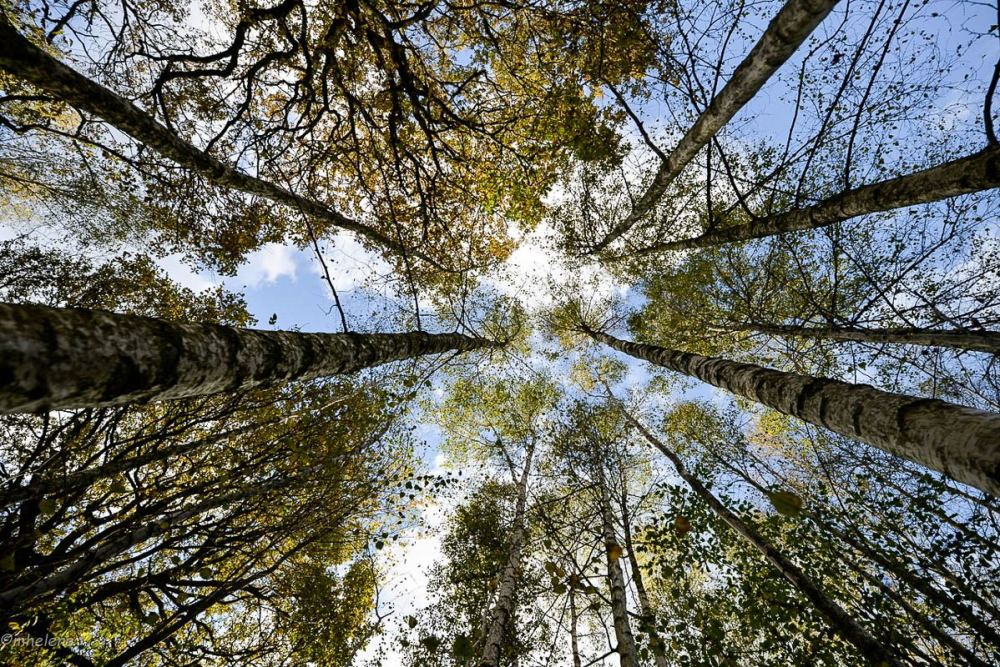 Les arbres -4