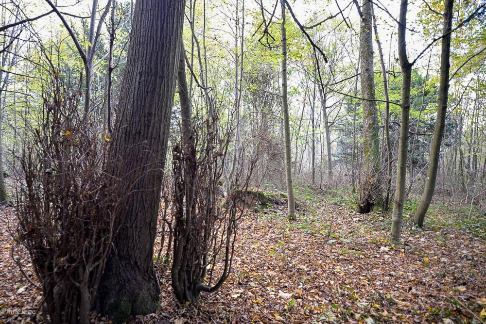 Les arbres -5