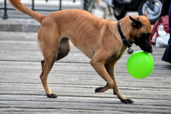 Le ballon vert