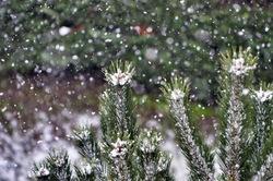 Jours de neige -3