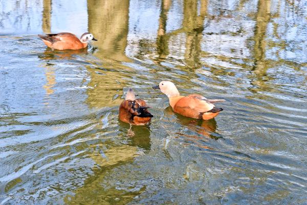 Balade inondée ...d'eau et de soleil