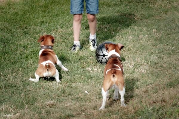 Tout le monde joue ... Foot!!!