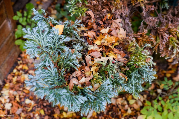 Berceau des feuilles d'automne