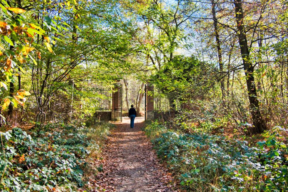 Vers la forêt Notre-Dame