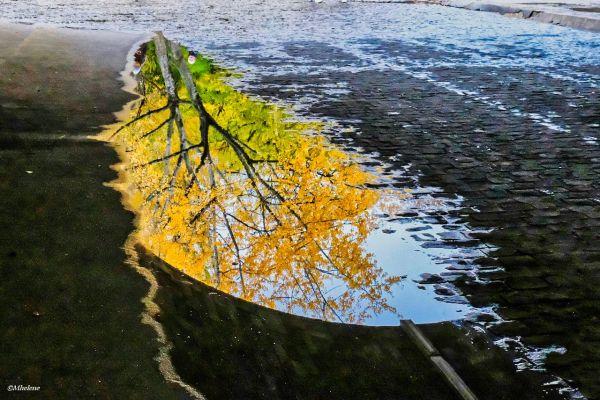 La feuille d'automne sur les quais