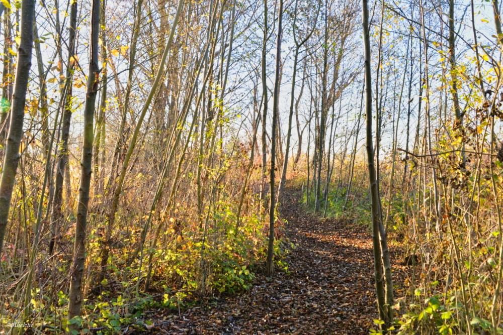 Chemin du bois