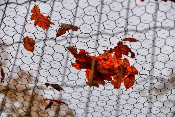 La feuille d'automne