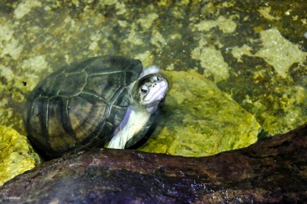 Conversation avec une tortue
