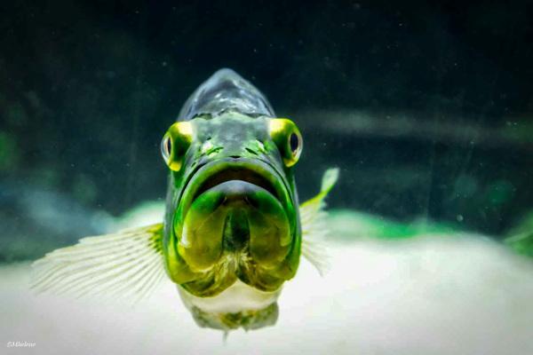 Dans l'aquarium