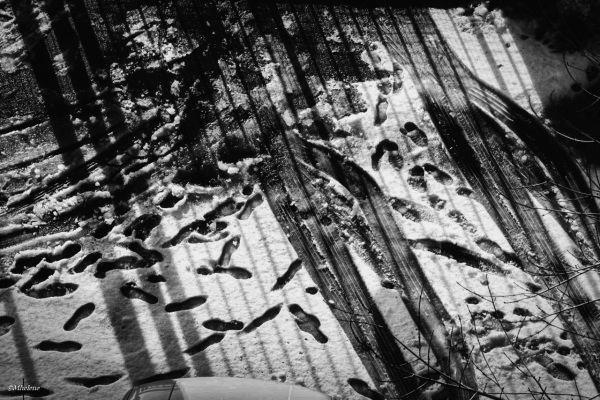 Neige traces et ombres