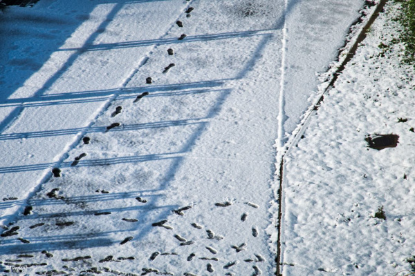 Neige , traces et ombres - 3
