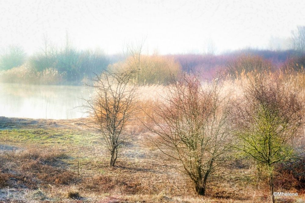 Matin d'hiver près des étangs