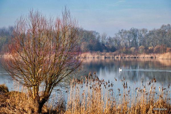 Matin d'hiver près des étangs - 2