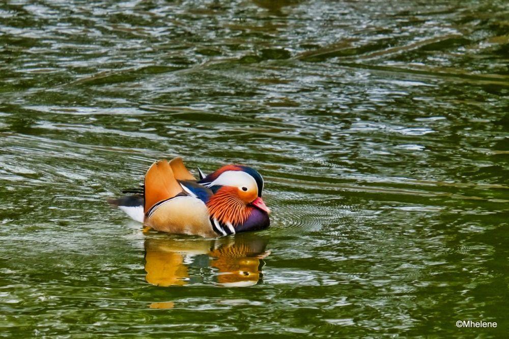 Le Mandarin