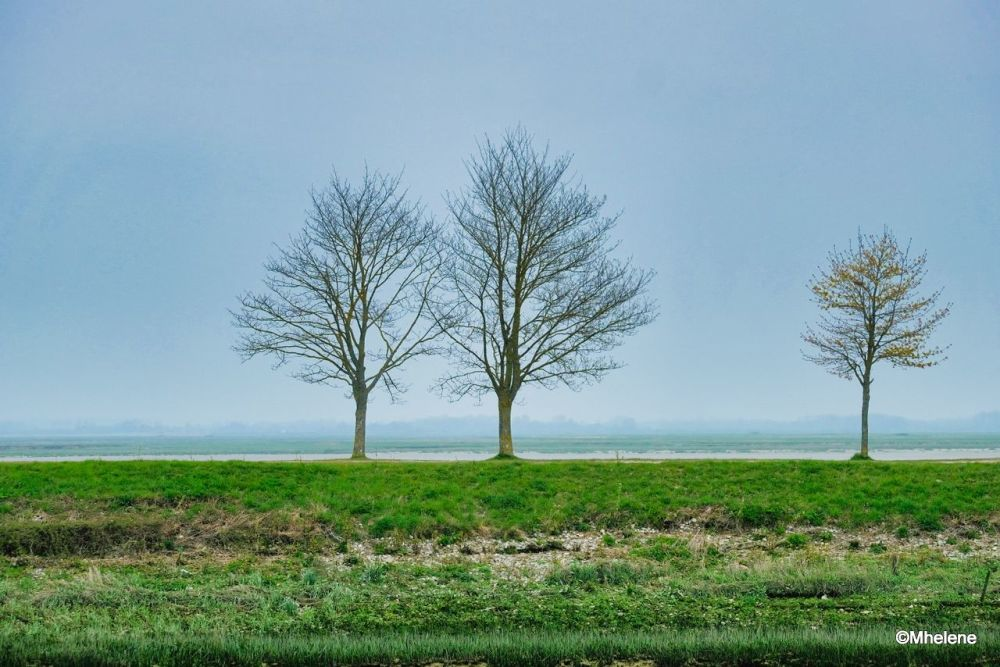Three trees along the bay