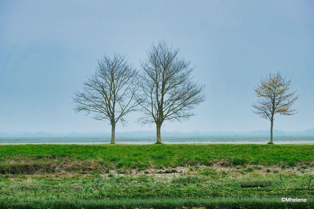 Three trees along the bay