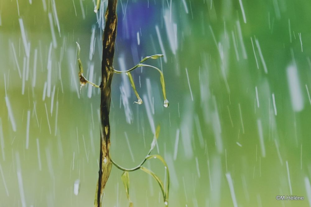 Le rideau d'eau