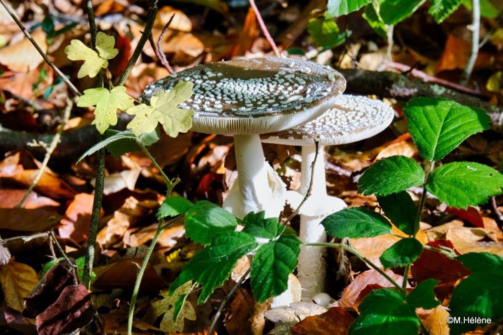 Les champignons -3