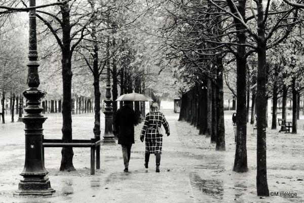 Jardin des Tuileries   3