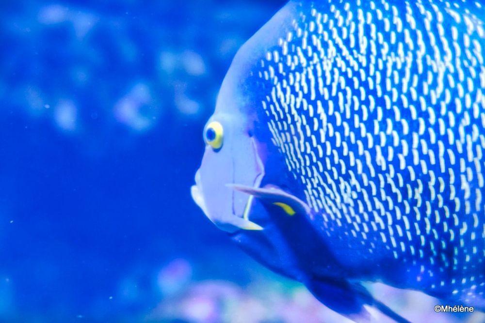 L'aquarium -3