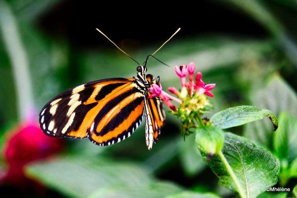 Serre aux Papillons -2