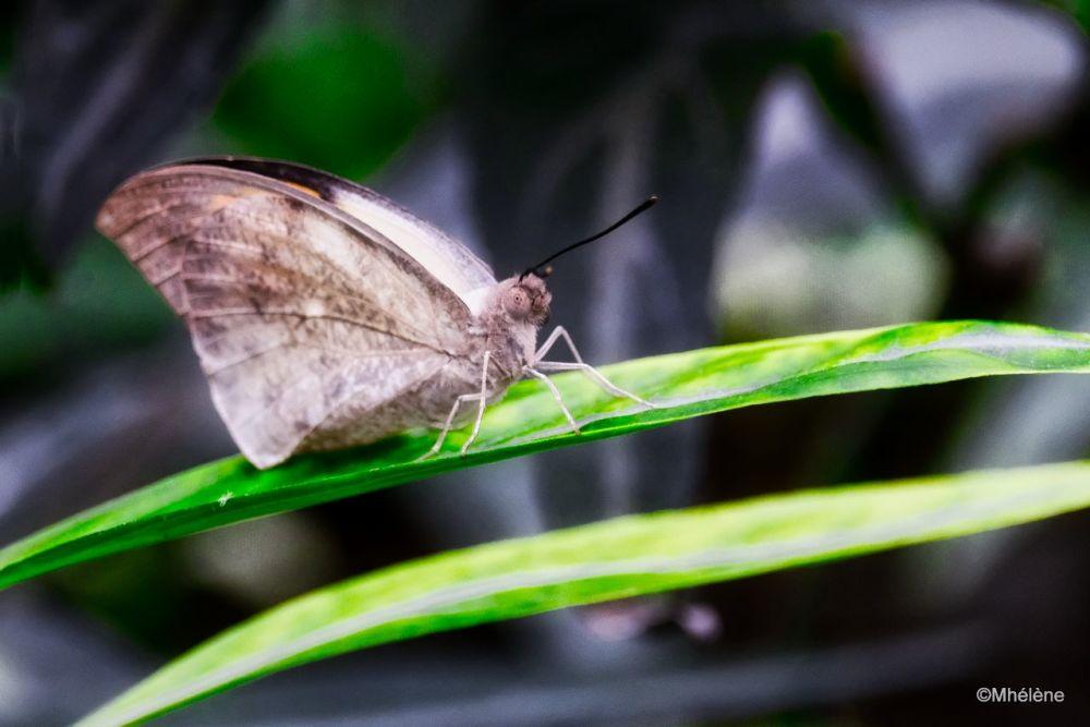 Serre aux Papillons -3