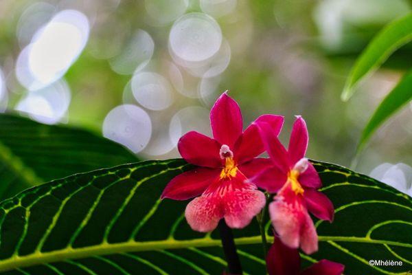 Mille et une Orchidées 3