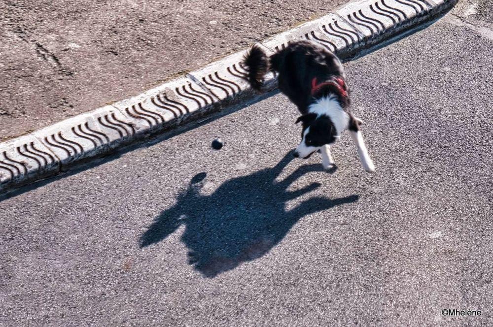 Quand l'ombre saute avec la balle