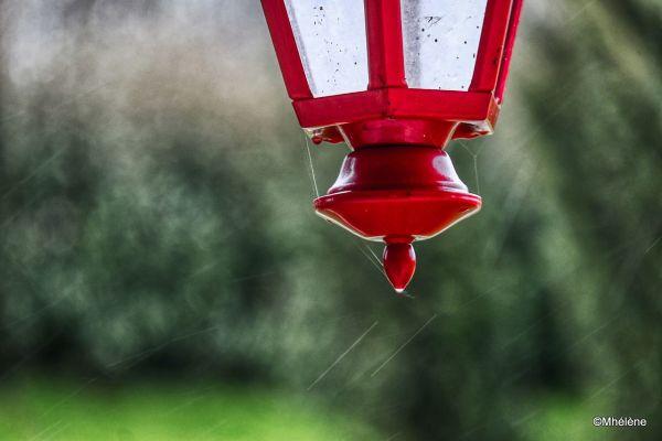 Fils d'araignée sous la pluie