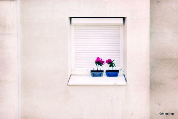Tendre penchant des fleurs