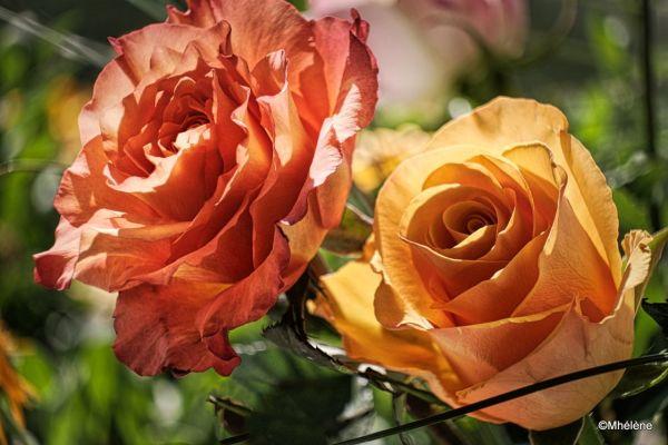 Dans mon bouquet