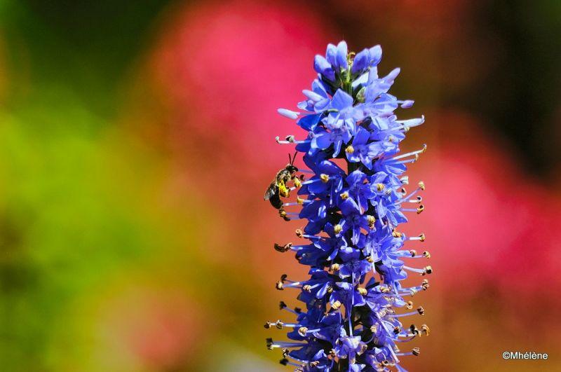 Les abeilles voient 3 couleurs