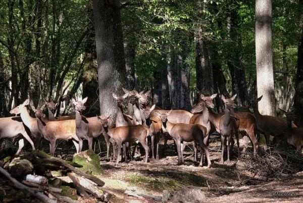 Dans la forêt -(le harem du pacha)
