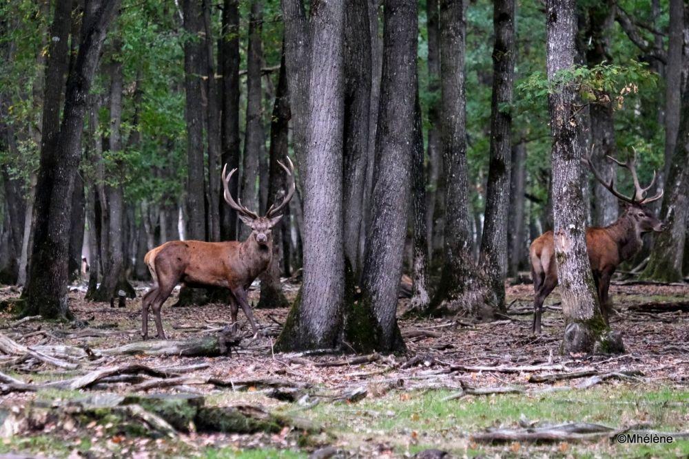 Dans la forêt 3