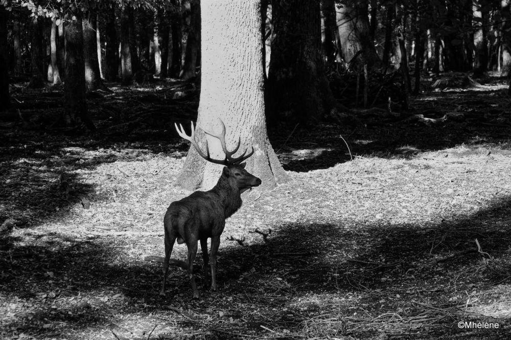 Dans la forêt - 4