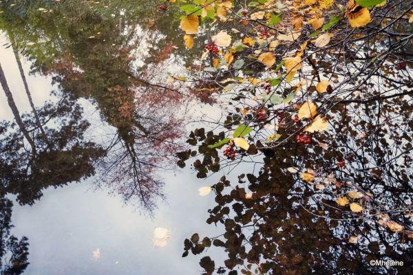 L'automne au fil de l'eau - 3