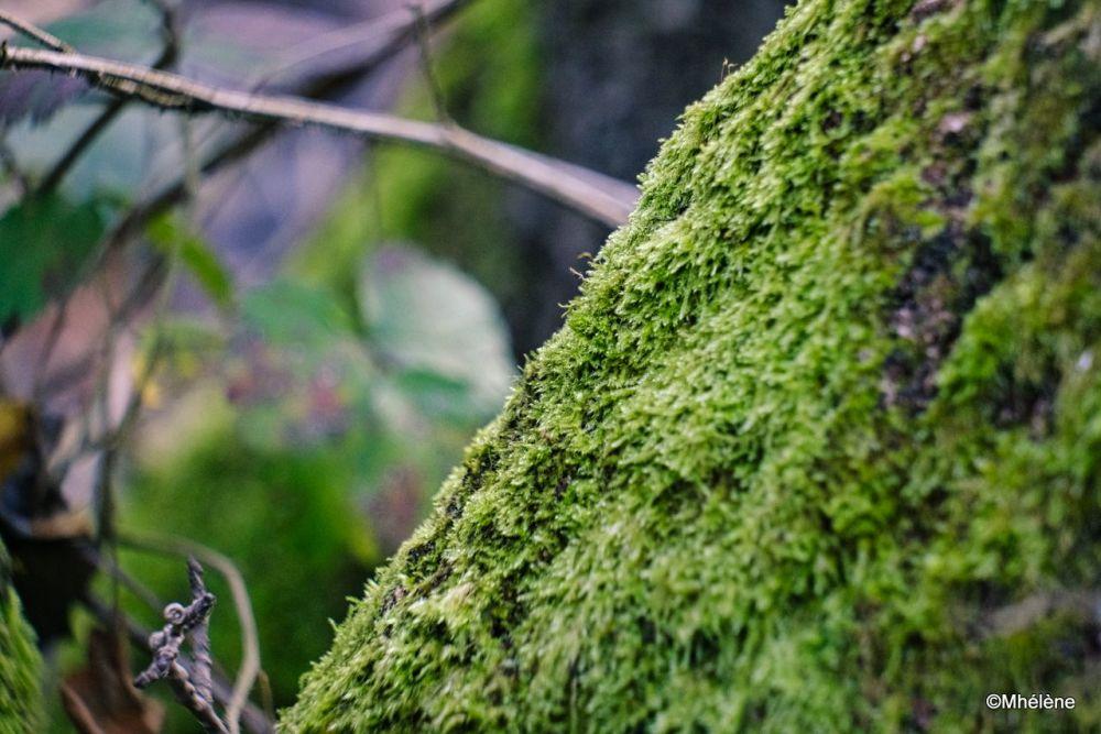 En forêt -2