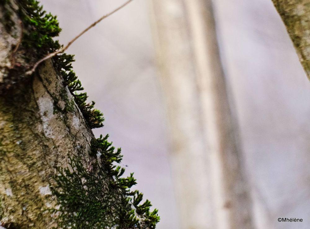 En forêt -3