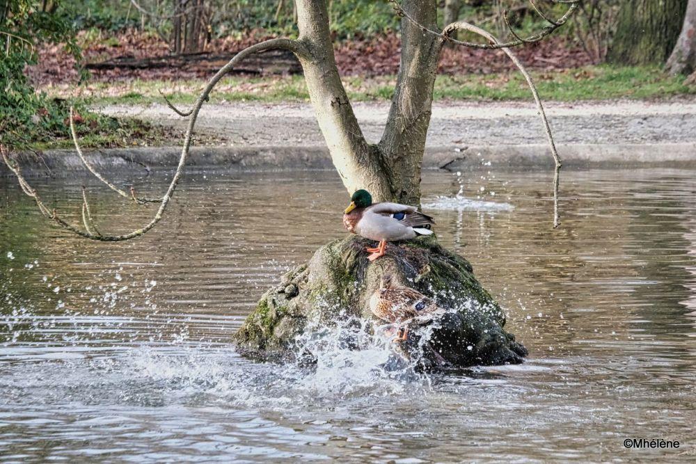 Fun to splash on Tuesdays
