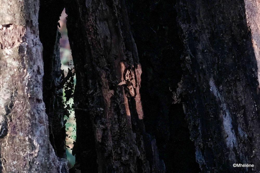 Le tronc creux